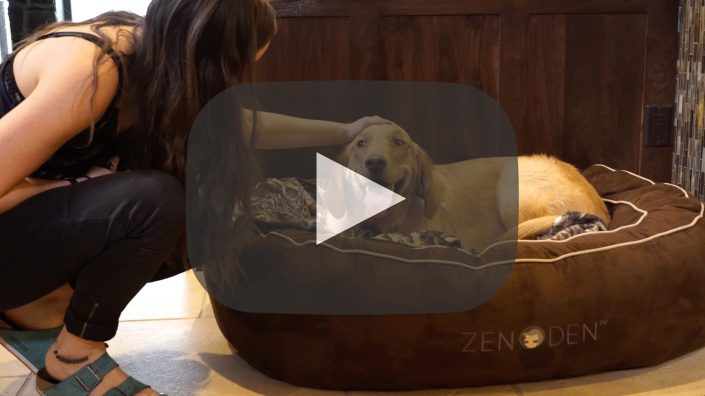 zen-den-dog-dogbed-promo-commercial-video-commercial-buisness-small